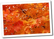 autumn-fall-leaves